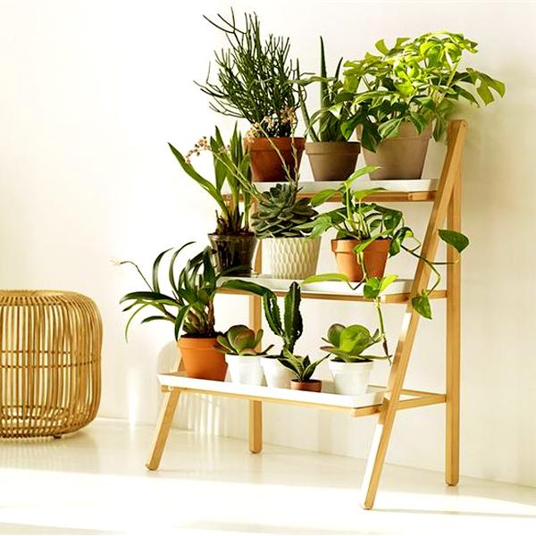 Decora o verde detalhes que fazem a diferen a - Plantas de interior para salon ...
