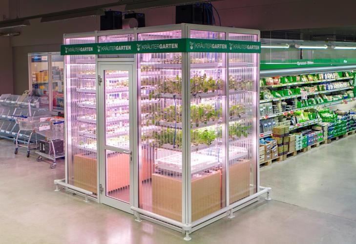 clientes-colhem-legumes-em-mercado