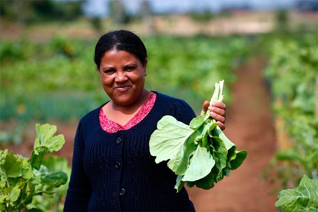 agricultura-urbana-curitiba