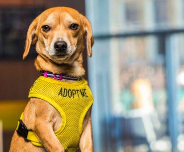 Hóspedes são recebidos por cães disponíveis para adoção
