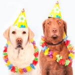 cachorro-carnaval