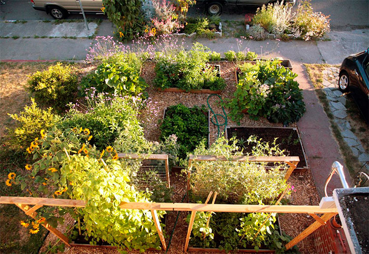 homem-transforma-jardim-em-horta-03