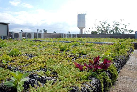 primeira-escola-sustentável-da-América-Latina-e-seus-diferenciais-03