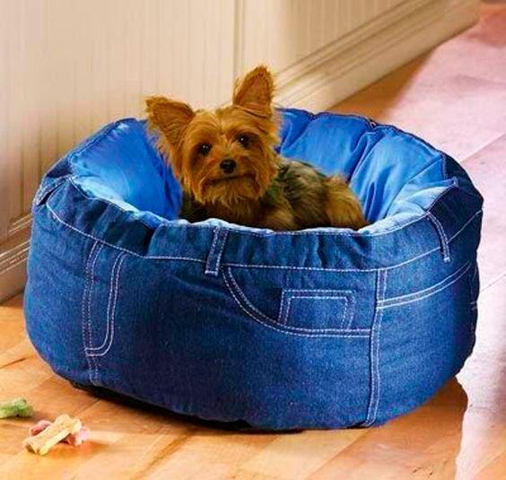 caminha-cachorro-jeans