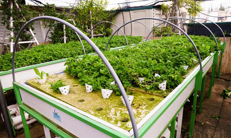 fazenda-urbana-shopping-israel-04