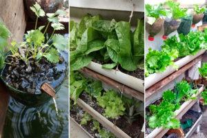 Nossos leitores e suas hortas