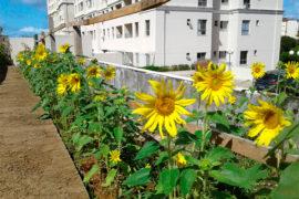 sustentabilidade-condominio-mai-04