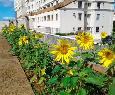 Síndica promove revolução sustentável em seu condomínio