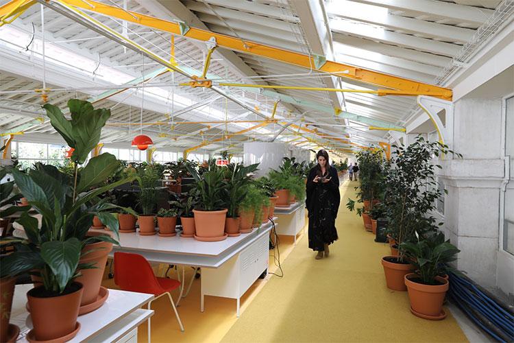 Overdose de plantas é o segredo deste lugar para trabalhar melhor