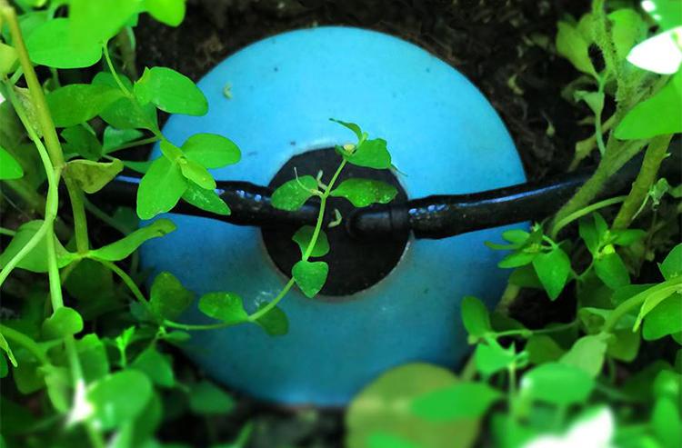 pote de cerâmica irriga plantas por até um mês