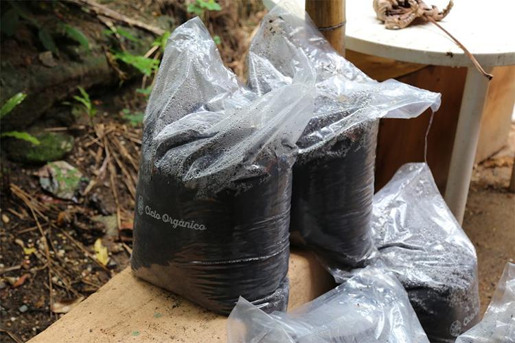 Empresa coleta e composta lixo orgânico
