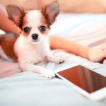 Tinder Pet conecta animais abandonados a quem deseja adotar