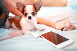 Tinder Pet conectará animais abandonados a quem deseja adotar