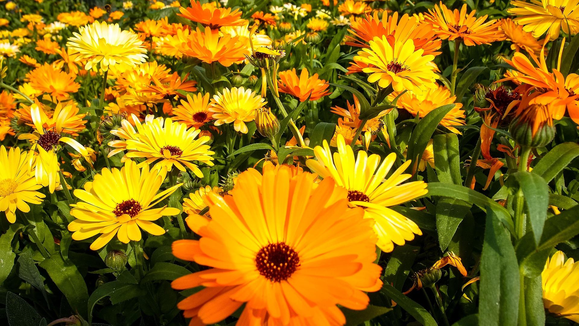 Plantas dentro de casa trazem benefícios para a saúde