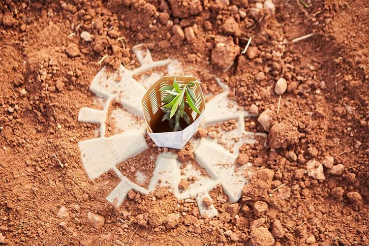 Vaso biodegradável propicia o plantio no deserto