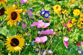 30 dicas e segredinhos de jardinagem