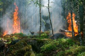 Humanidade já extrapolou o estoque de recursos naturais deste ano