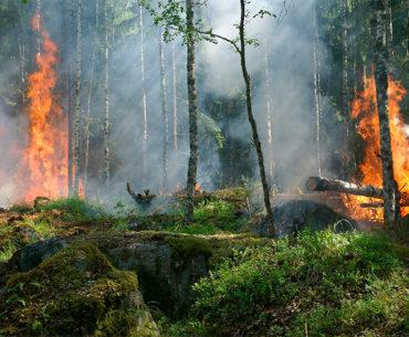 Humanidade já extrapolou os recursos naturais deste ano