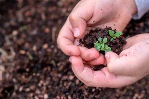 Oito motivos para usar hortas escolares na educação ambiental