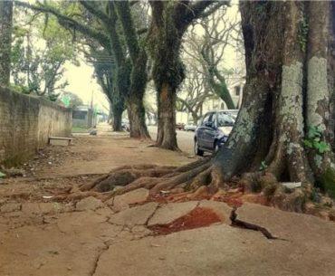 O que fazer quando árvores danificam as calçadas?