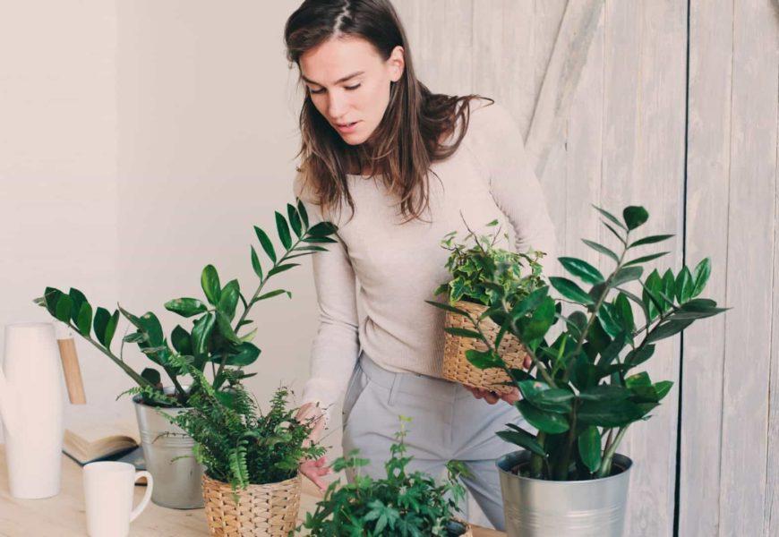 Vai viajar? Saiba como manter as plantas saudáveis!